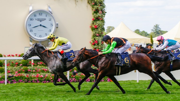 Nagano Gold (number 6) finishing second to Defoe at Ascot in June
