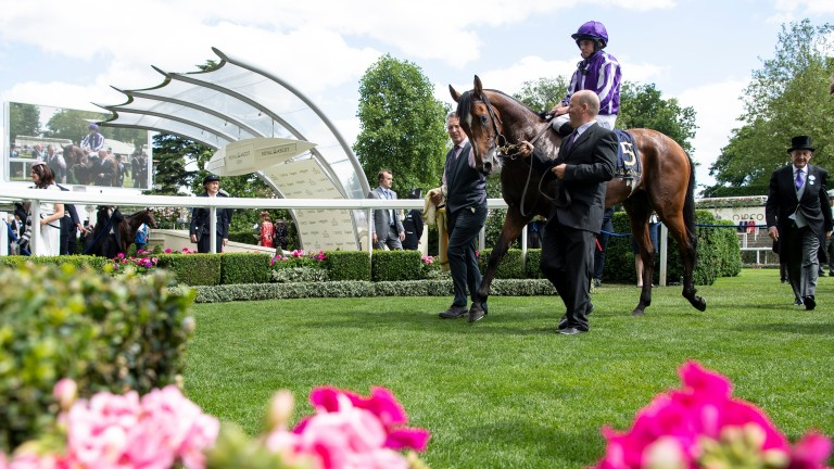 Japan: a brother to another Royal Ascot winner in Sir Isaac Newton