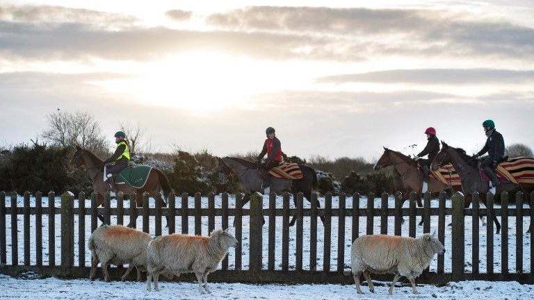 A total of 873 horses are stabled and trained around the Curragh