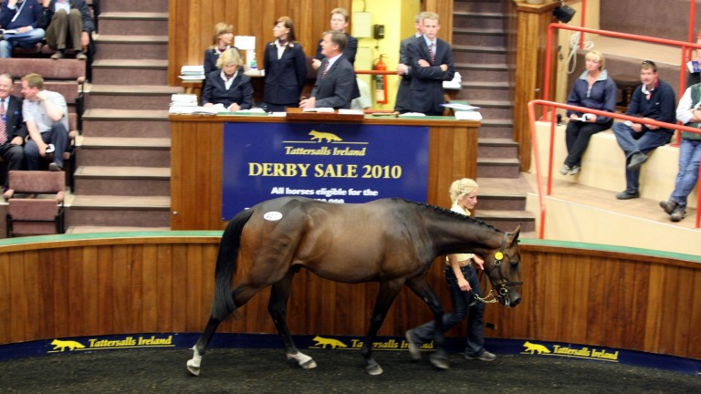 Empire Of Dirt: Bobby O'Ryan was forced all the way to E325,000 to secure the son of Westerner offered by Goldford Stud on behalf of Lady Jane Grosvenor in 2010. That faith was repaid when he later won six races in the colours of Gigginstown House Stud.