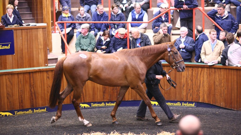 First Lieutenant: standing room only as the Redpender Stud-consigned son of Presenting sells to Mags O'Toole for E255,000 at the 2008 Derby Sale. He went on to win three Grade 1s, including when beating Rock On Ruby at the 2011 Cheltenham Festival