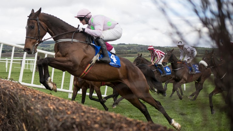 Douvan: a brother to the top-class chaser sold for ?140,000 during day one of the Tattersalls Ireland Derby Sale