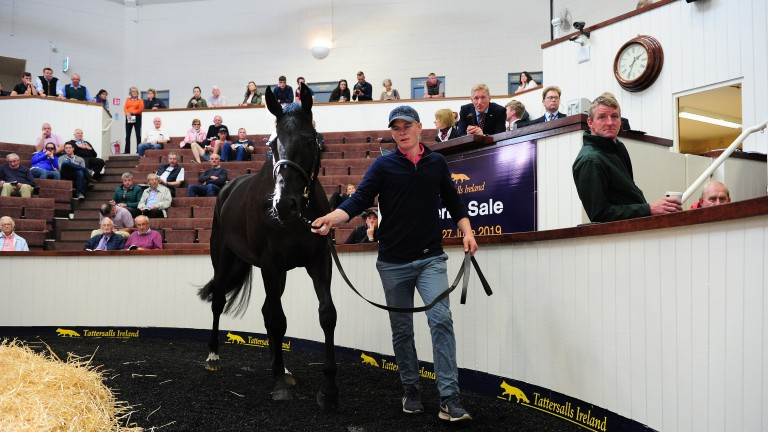 Lot 73: the Sluggara Farm-consigned Gigolo' Dai Dai in the Fairyhouse ring before being knocked down to Kevin Ross