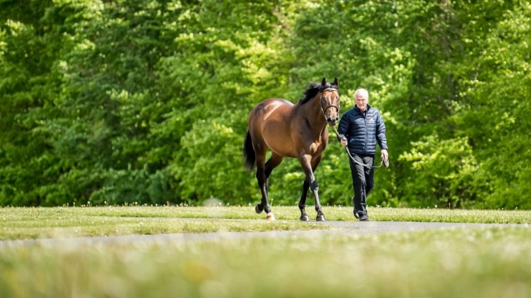 Muhaarar: off the mark at stud thanks to speedy filly Raheeq