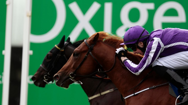 Australia (near side) went close on his debut at the Curragh in 2013 and won the Derby and Irish Derby the following season