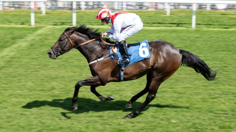 Invincible Army and PJ McDonald back in action at Newcastle a week after Royal Ascot reverse