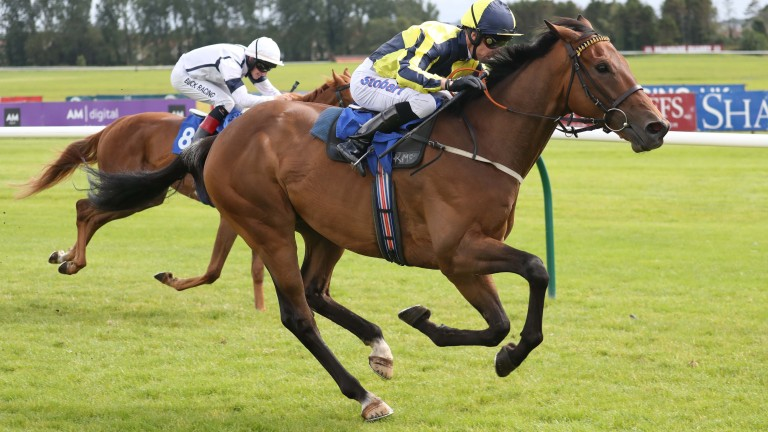 Home hope: Dubawi Fifty bids to raise the roof for the locals at Newcastle on Saturday