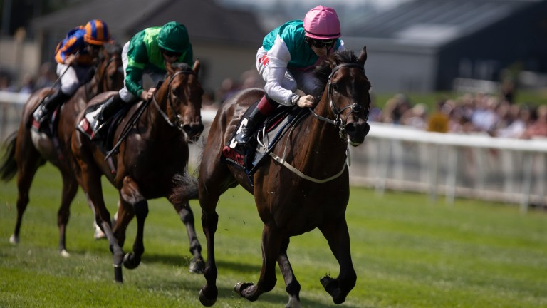Siskin: looks Ireland's best juvenile after his impressive success in the Railway Stakes