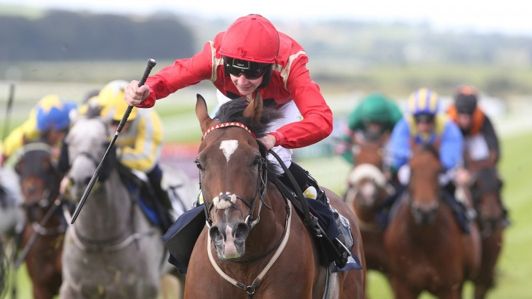 Ice Age: consistent sprinter who has a great record at Windsor