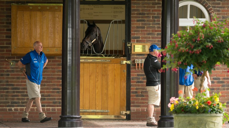 Golden Horn: stood at Dalham Hall since his retirement