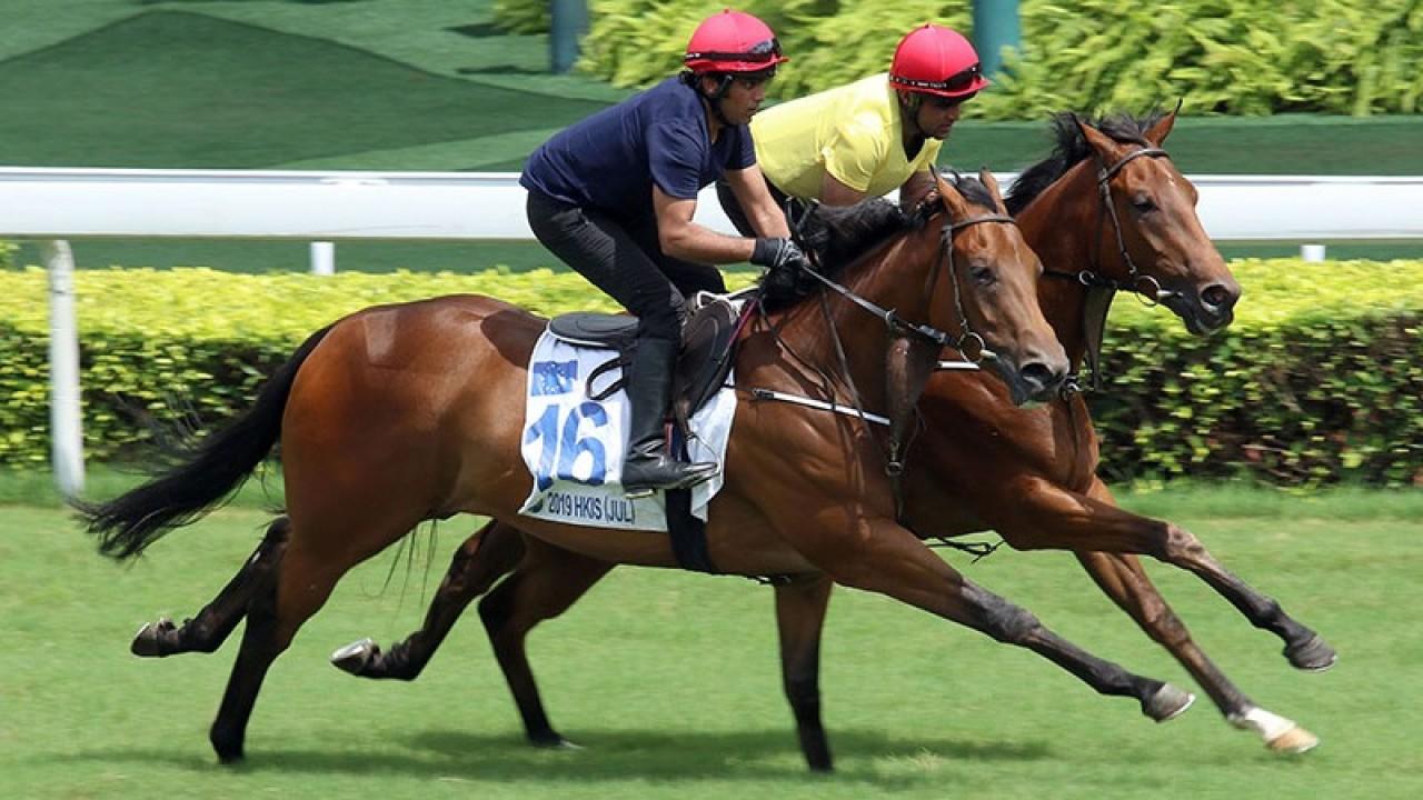 Irish bred son of Kodiac tops the Hong Kong International