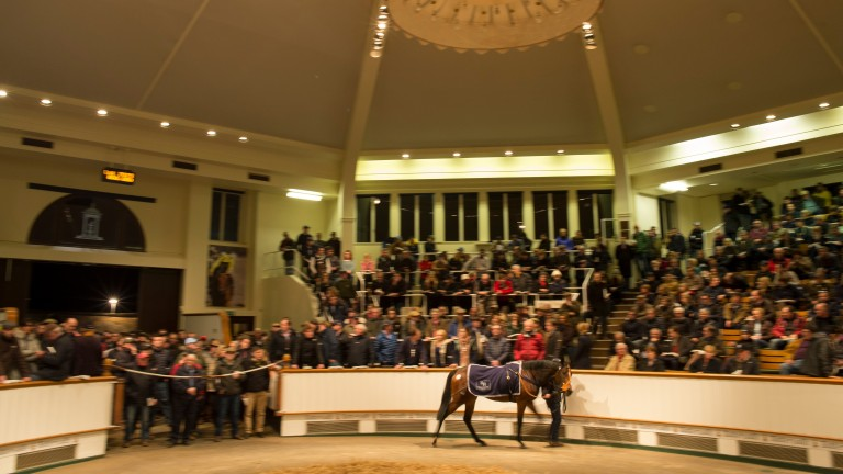 Tiggy Wiggy in the Tattersalls ring before being sold to MV Magnier for 2,100,000gns