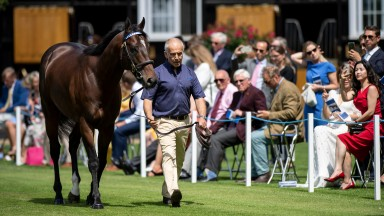 Champion sprinter Blue Point is paraded at the Darley stallion parade at Dalham Hall StudNewmarket 11.7.19 Pic: Edward Whitaker