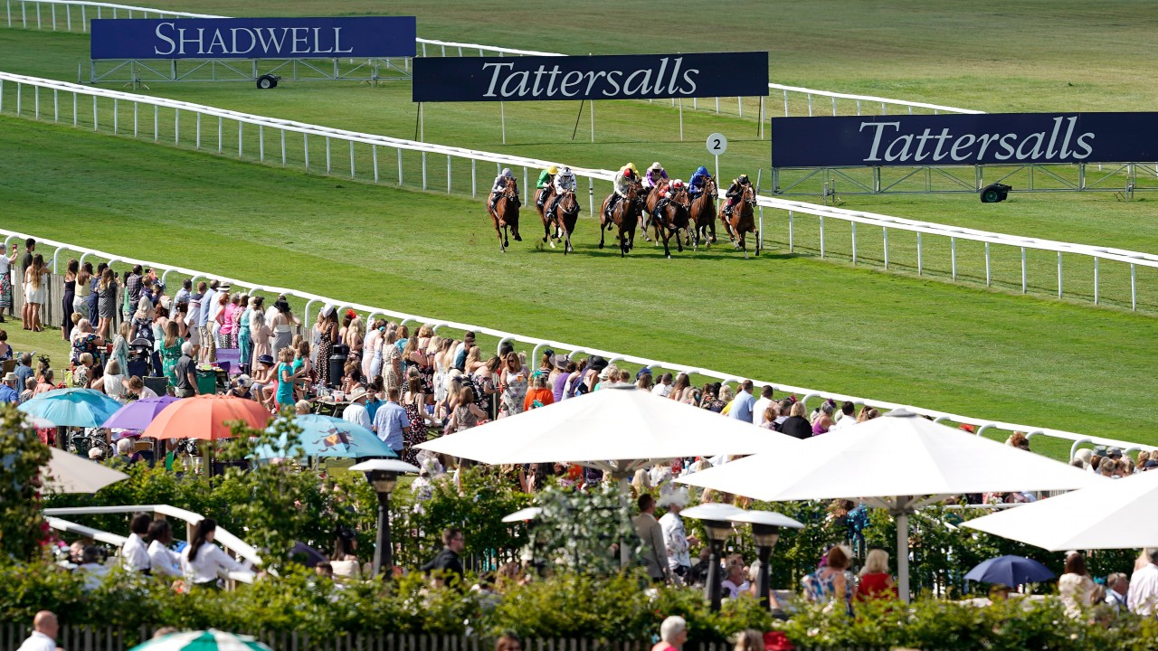Friday's free racing tips: our experts' best bets for a day