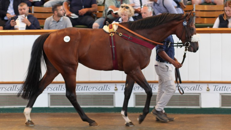 New King: the son of Frankel in the Park Paddocks ring