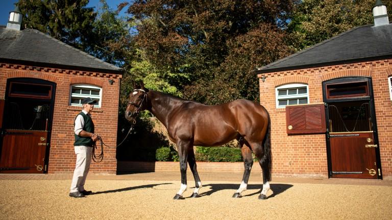 Frankel with stallion handler Rob Bowley at Banstead Manor Stud