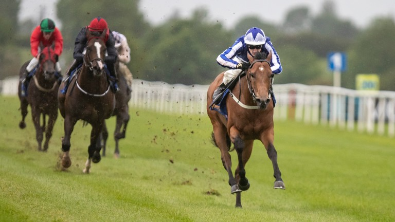 Sunday Sovereign (blue and white): makes his debut for Roger Varian in the Scurry Stakes