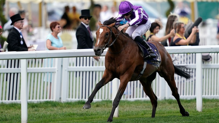 Japan: an 80th elite winner for supersire Galileo