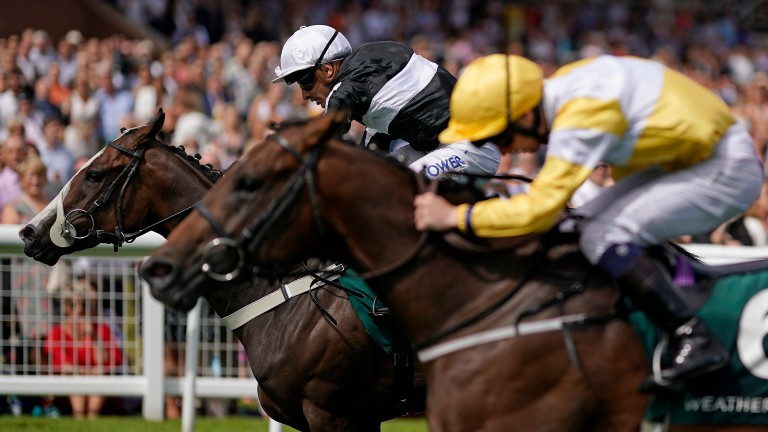 Bettys Hope (black and white) edges out Show Me Show Me in the Weatherbys Super Sprint at Newbury