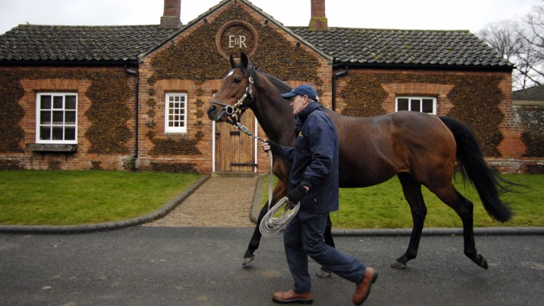 Motivator is led to the paddock in the walled garden at The Queen's Sandringham Stud by stallion man David Cartledge in 2009