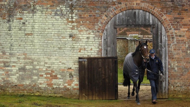 David Cartledge leads Motivator into his paddock in the walled garden at The Queen's Sandringham Stud
