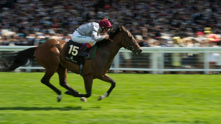 The Wow Signal: Prix Morny winner was sourced by Richard Knight