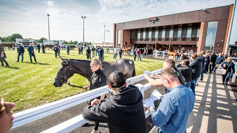 Goffs UK: start studying for the company's Summer Sale