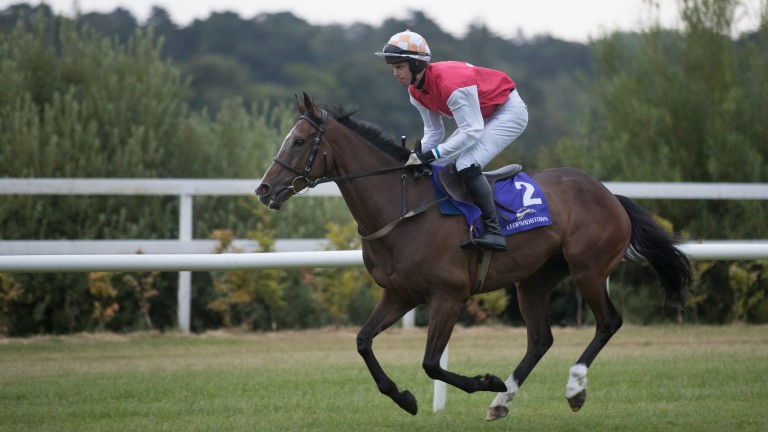 Davids Charm: ran well in the Galway Hurdle before winning on the Flat at Killarney last month