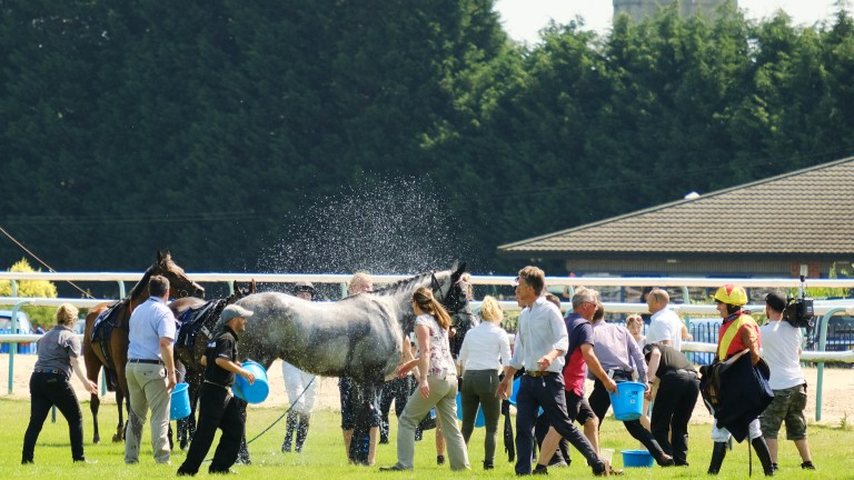 Cooling down the runners, before racing was abandoned at Southwell due to the extreme heat