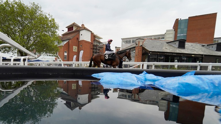 Ice cold water at the ready in the unsaddling area at Newbury