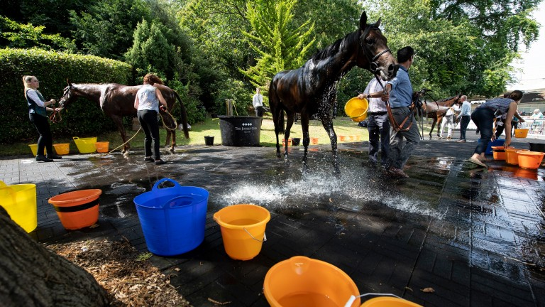 Horses are cooled down after the 1m 6f handicap won by Just Hubert at Sandown