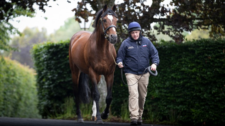 Galileo: the perennial champion sire supplied this 198th Group winner on Thursday