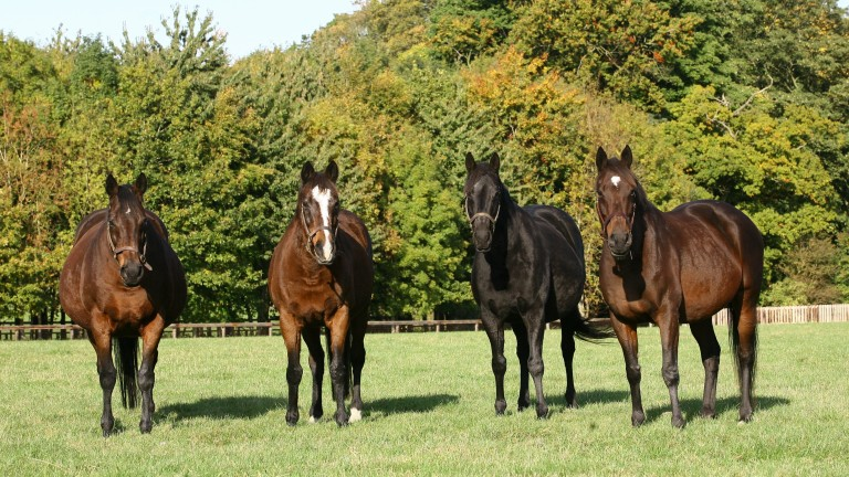 From left to right: Banks Hill, Hasili, Heat Haze and Intercontinental