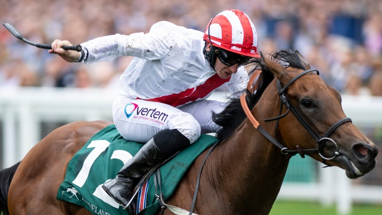 Under The Stars: his dam Jumeirah Palm Star was sold for just 1,000 euros last year