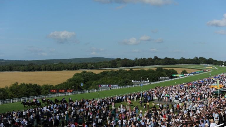 Goodwood racecourse: hosts five days of top Flat racing action this week