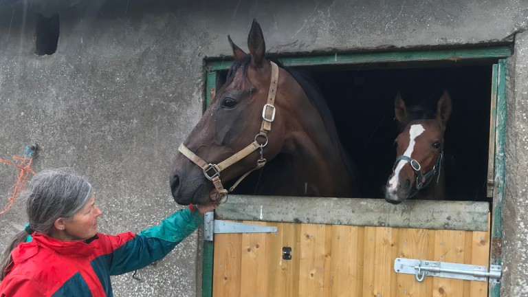 Grania Barrett with Kerrys Cottage and her inquisitive Diamond Boy filly