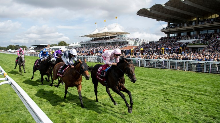 Circus Maximus: just edged out by Too Darn Hot in last year's Qatar Sussex Stakes