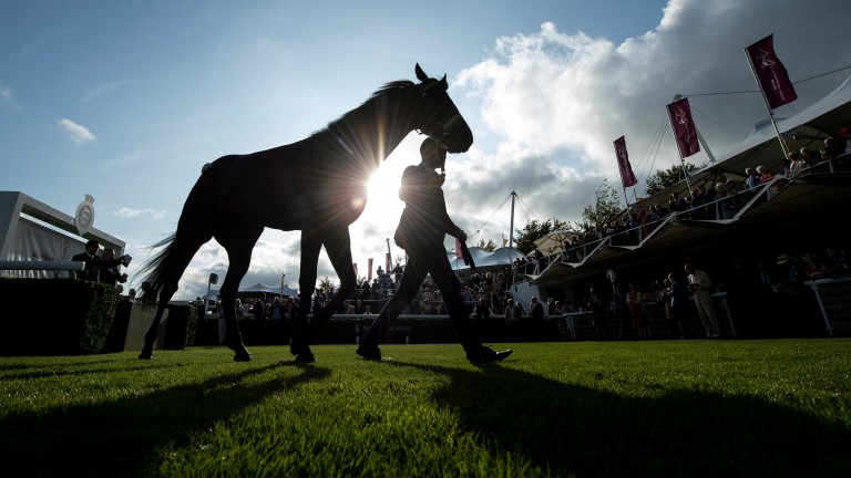Visitors to the Goodwood Sale enjoy the early evening sunshine