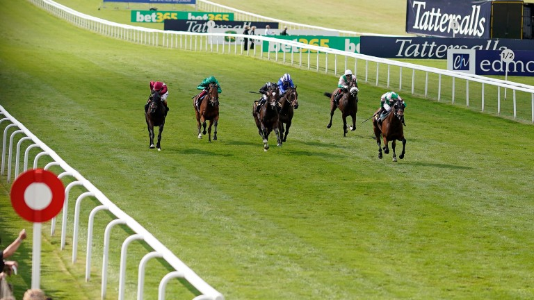 Duke Of Hazzard (right) won well at Newmarket last time