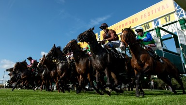 Runners in the 5f Tatler Handicap break out of the stallsGoodwood 1.8.19 Pic: Edward Whitaker