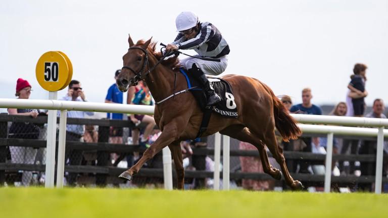Alpine Star: was an impressive Galway winner in 2019
