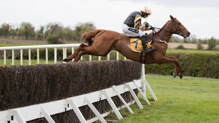 Yorkhill has dropped in the ratings and is a possible for the Ladbrokes Trophy