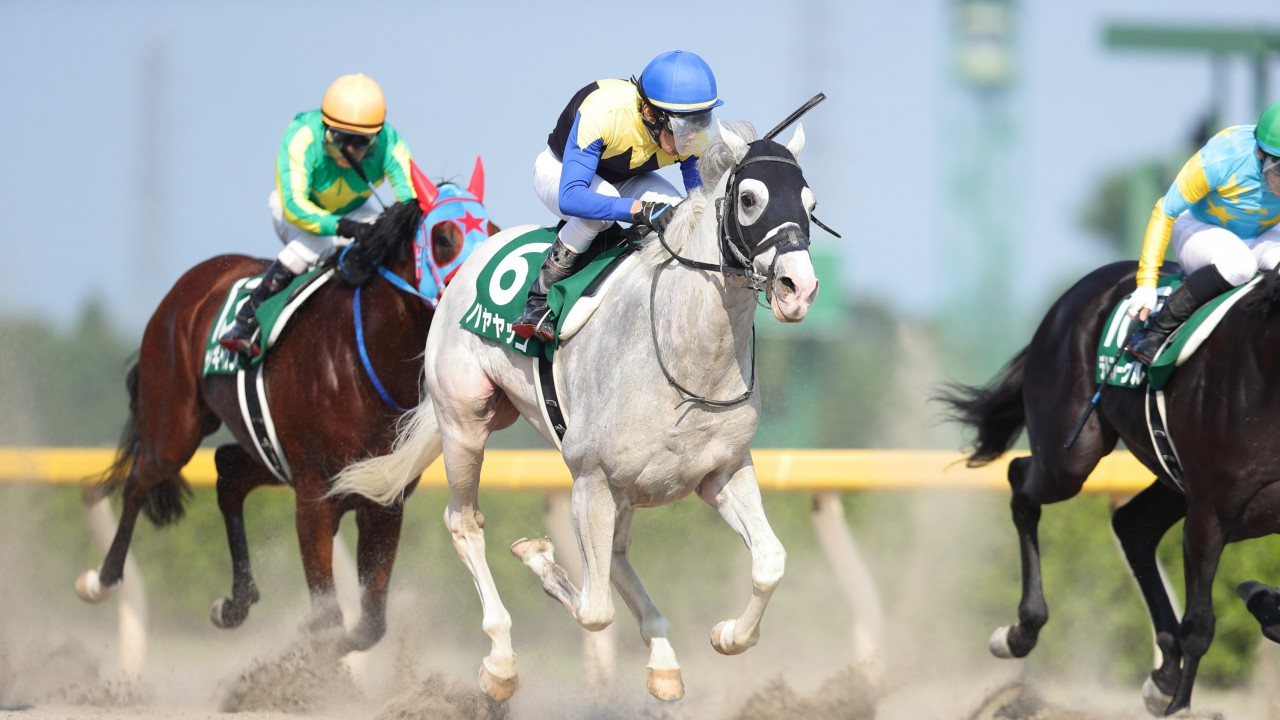 Extremely Rare White Thoroughbred Wins Group 3 In Japan Horse Racing News Racing Post
