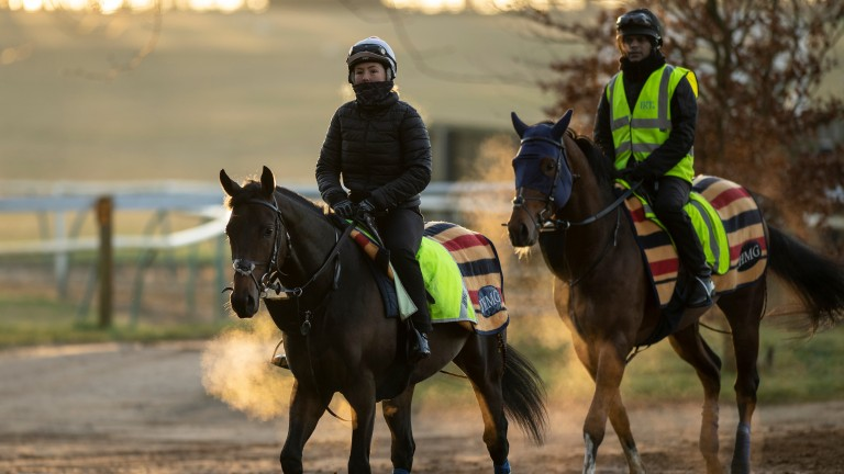 Dubai Warrior (right): in action on Wednesday evening