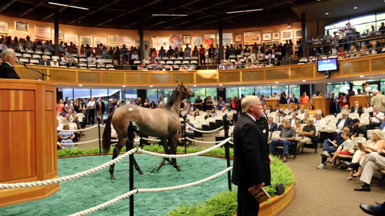 Saratoga's sale ring will be buzzing on Monday and Tuesday