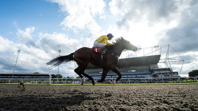 Dubai Warrior: made it two wins from two starts at Kempton