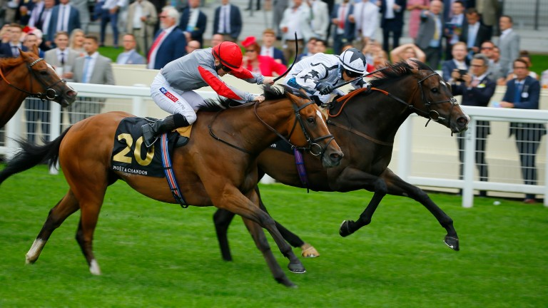 Raising Sand (far side) and Kaeso are among the course regulars declared at Ascot