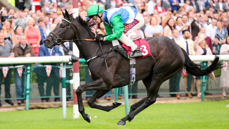 Miss O Connor: a private purchase by Sam Haggas on behalf of Lael Stables