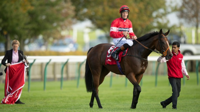 Tiggy Wiggy: WH Bloodstock consign a Galileo half-sister to the Group 1-winning juvenile