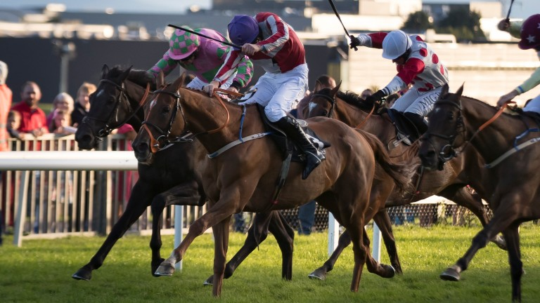 The ill-fated Top Othe Ra (purple cap) recording his third Galway festival win last year
